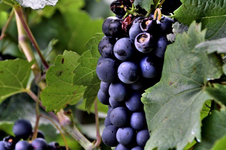 13: Más Vinos Orgánicos Y Vinos Artesanales