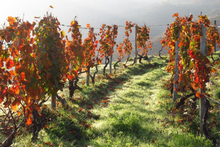 14: Vinos De Portugal