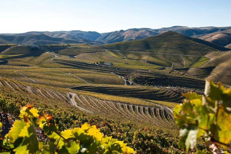 23: Más Sobre Los Vinos De Portugal